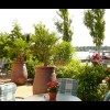 Restaurant Resort Mark Brandenburg - Seewirtschaft in Neuruppin (Brandenburg / Ostprignitz-Ruppin)