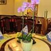 China-Restaurant Konfuzius in Köln (Nordrhein-Westfalen / Köln)]