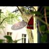 Restaurant HONCA Anatolia Cuisine in Berlin