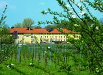 Logo von Restaurant Steigenberger Hotel Deidesheim in Deidesheim